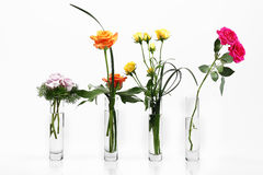 Flowers. Assortment of flowers in white Stock Photos