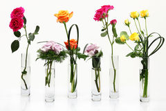 Free Flowers Royalty Free Stock Images - 17269809