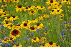 Flowers. Colorful field of flowers Royalty Free Stock Image