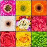Flowers. Collage of nine different flowers Royalty Free Stock Images