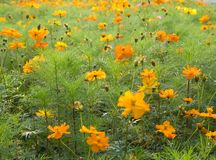 Flowers. Orange flowers (Forest of Flowers Royalty Free Stock Images