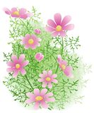 Flowers. Floral background with pink flowers Stock Photography
