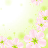 Flowers 2.pink blossoms Royalty Free Stock Images