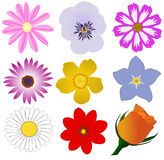Flowers. A couple of different flower illustrations royalty free illustration