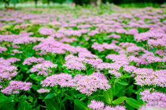 Flowers. Pink flowers blooming in park stock photography