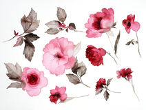 Flowers stock illustration