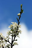 Flowers. Spring flower on a background of the sky Stock Photography