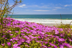 Flowers. Small lilac flowers on the seashore Stock Photos