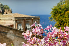 Flowers. In scopello in sicily in italy Royalty Free Stock Image