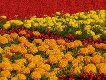 Flowers. Carpet Stock Photos