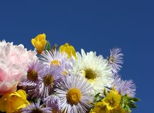 Flowers. On a background of the sky Stock Photography