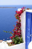 Flowers. Old door and flowers on caldera of Santorini island, Greece royalty free stock image