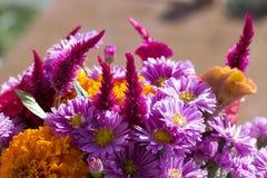Free Flowers Stock Photos - 26792663