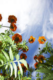 Flowers. From below and blue sky Stock Image