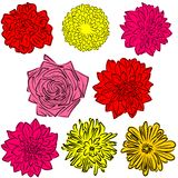 Flowers. An a vector illustration of Flowers . Files included: Illustrator 8 EPS and JPG Stock Illustration