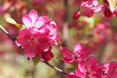 Flowers 库存照片