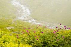 Flowers. In the Kachkar park in east Turkey Royalty Free Stock Images