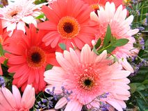 Flowers. Vibrant and colorful background of flowers Royalty Free Stock Image