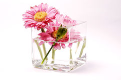 Flowers. In modern flowerpot isolated on white background royalty free stock photos