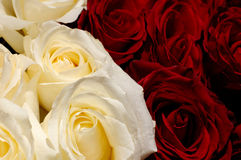 Flowers 37. White and red roses background stock image