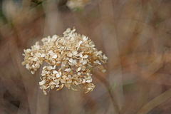 Flowers. Wild flowers on blurred background Stock Image