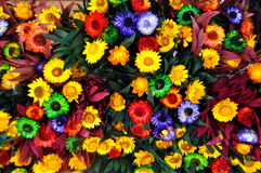 Free Flowers Stock Photography - 42671122