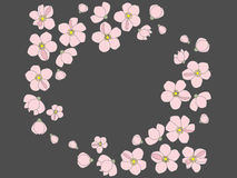 Flowers. Pink flowers on grey background Royalty Free Stock Images