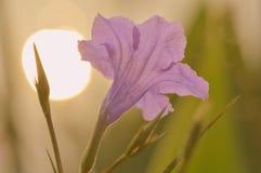 Free Flowers Stock Photo - 43107120