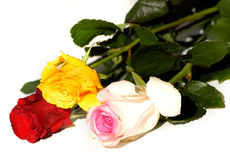 Flowers 45. Bunch of colorful roses royalty free stock images