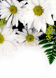 Flowers. A bouquet of flowers including daisies and fern Stock Photos