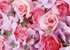 Flowers Royalty Free Stock Images