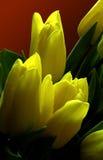 Flowers. Yellow flowers stock photo