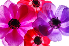 Flowers. Beautiful colorful flowers on white background Royalty Free Stock Images