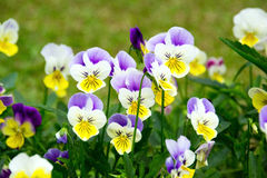 Free Flowers Royalty Free Stock Photos - 47891808