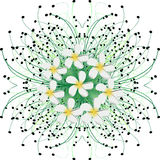 Flowers. Vector illustration -white flowers and green grass Royalty Free Stock Photography