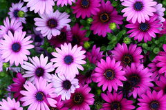 Free Flowers Royalty Free Stock Photo - 4999705