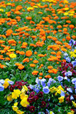Flowers. The flowers with beautiful colors Stock Image