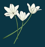 Flowers. Three vector image spring flower Royalty Free Stock Photo