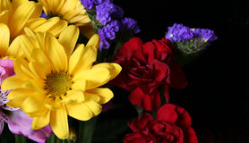 Free Flowers Stock Photography - 539382