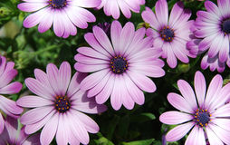 Flowers. Beautiful summer flowers close up Royalty Free Stock Photography