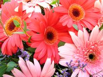 Flowers Stock Photos