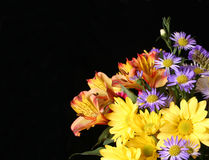 Flowers. On Black Background stock photo