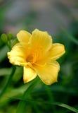 yellow flowers closeup shot Stock Photos