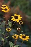Flowers. On sun Royalty Free Stock Photography