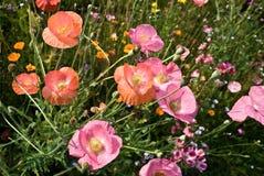 Flowers. Summer flowers in a garden stock photos