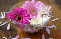 Flowers. Bowl with water and flowers Stock Images