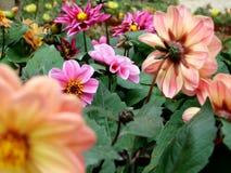 Flowers. Garden stock photo