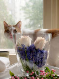 Flowers. Cat and flowers Stock Image