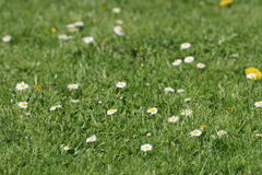 Flowers. In the grass Royalty Free Stock Image
