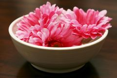 Flowers. Pink flowers in white vase stock images